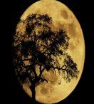 Efectos de la super luna en cada signo